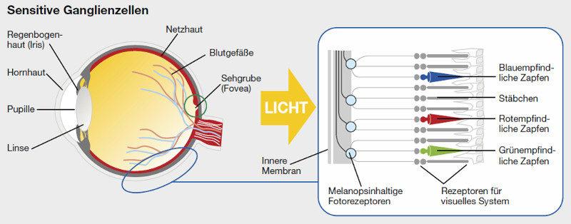 Das Zusammenspiel von blaues Licht auf die Ganglienzellen